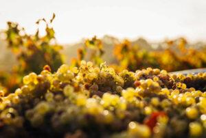 Top 6 einzigartige Weinregionen die man in Australien besuchen muss